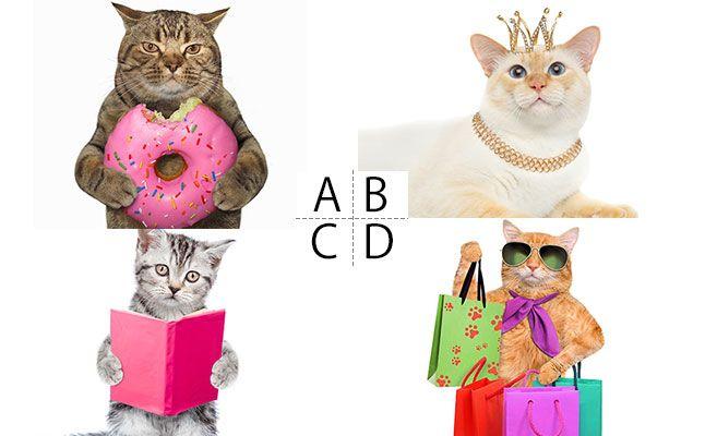 Aお菓子、Bアクセサリー、C書籍、雑誌、D服