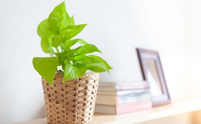アレを育てたらリアルに彼氏ができた!恋愛運が劇的アップする植物栽培のススメ